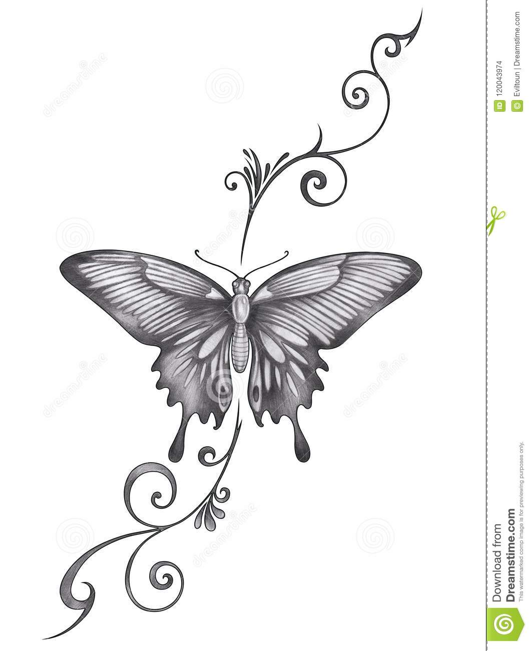 Butterfly Art Design Images