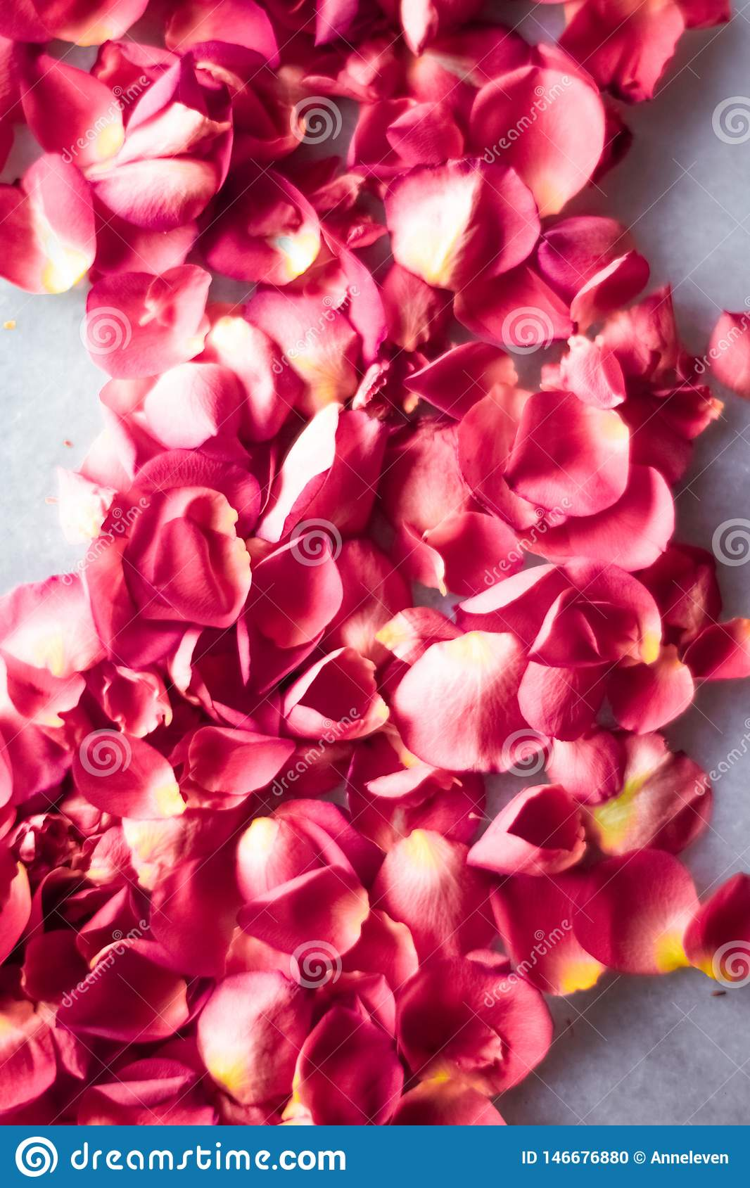 Rose petals on marble stone, floral background