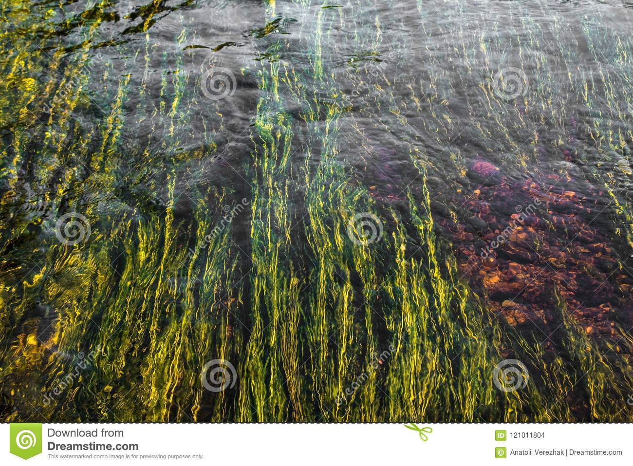 Art of green river weed in red rock bottom river