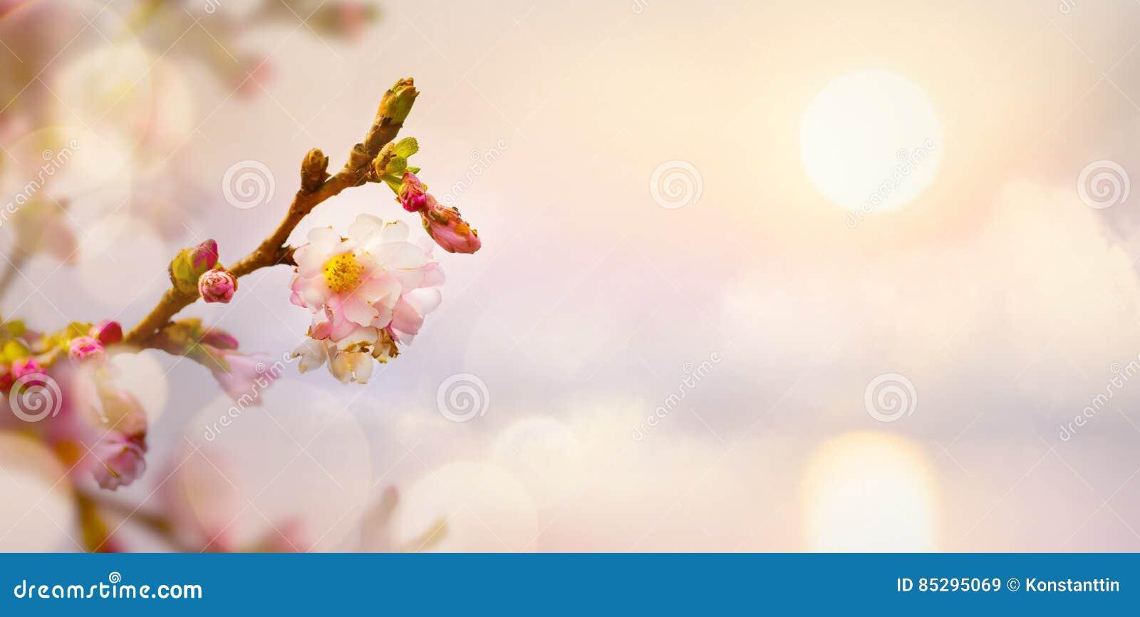 Art Spring Flower Background Easter Landscape Stock Image Image