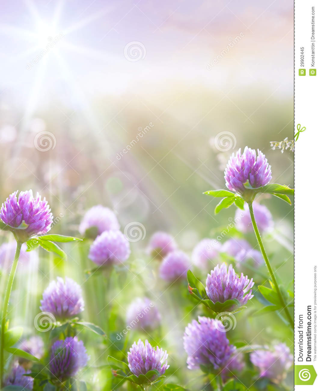 Nature Images 2mb: Art Spring Natural Background, Wild Clover Flowers Royalty