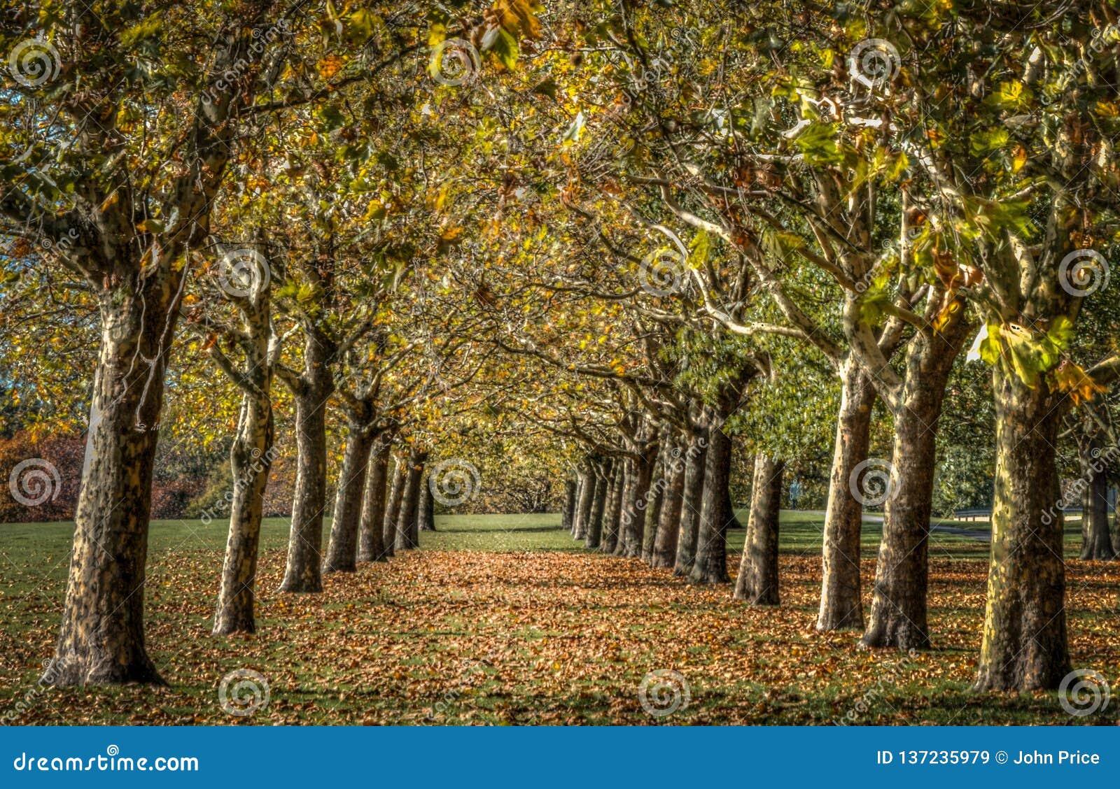 Arte abstracto de convergencia de los árboles del otoño