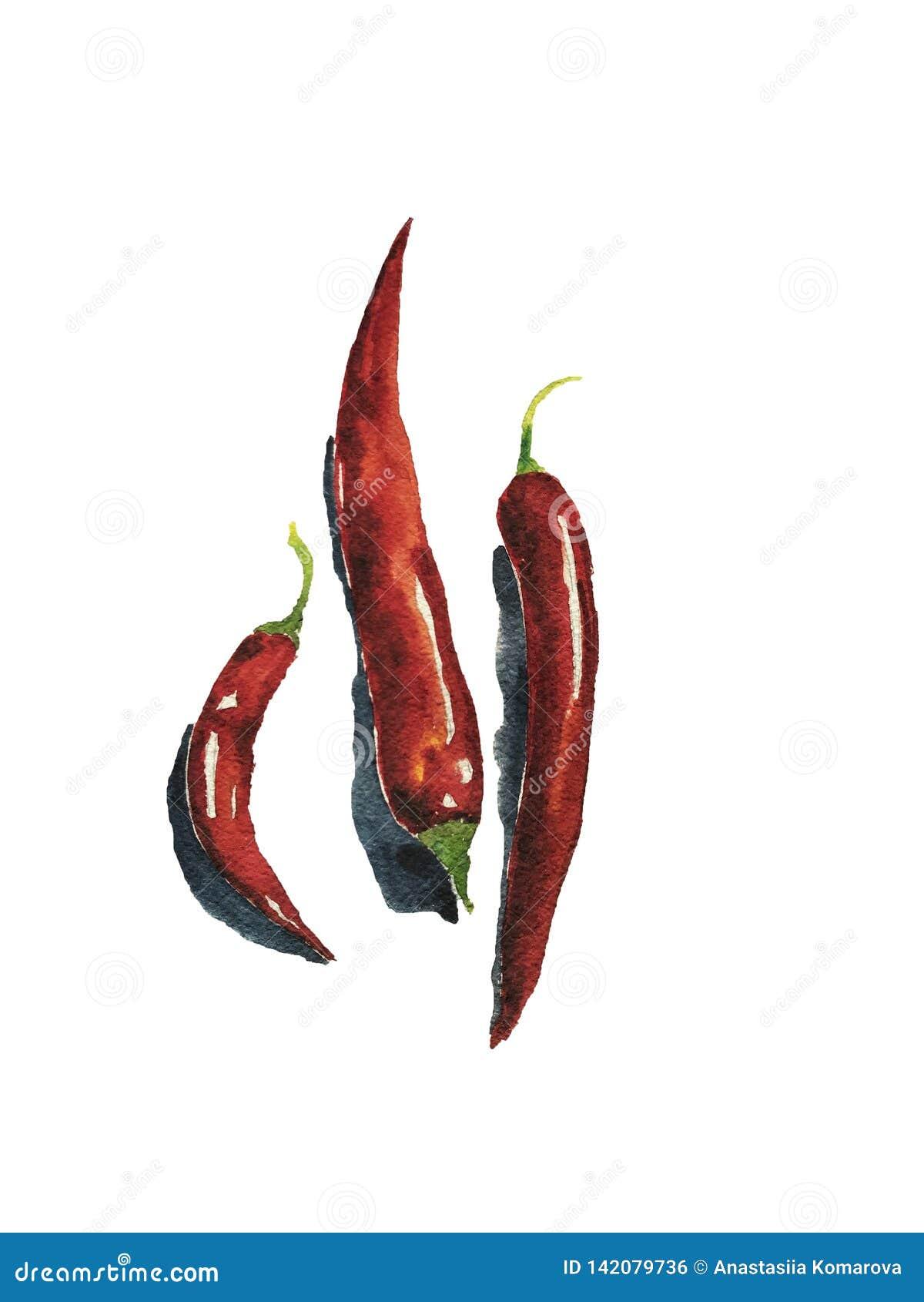 Arte de la acuarela de tres pimientas de chiles El arte se puede utilizar para el diseño del menú