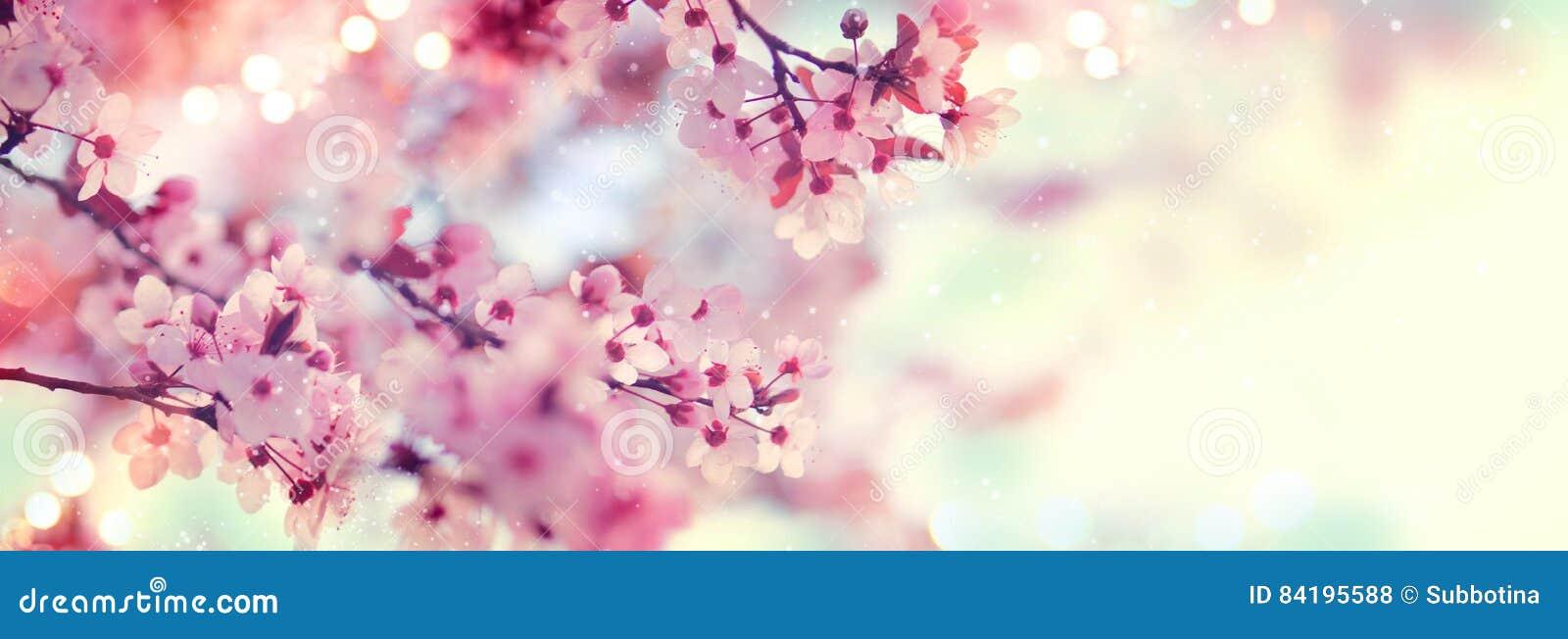 Arte de la frontera o del fondo de la primavera con el flor rosado