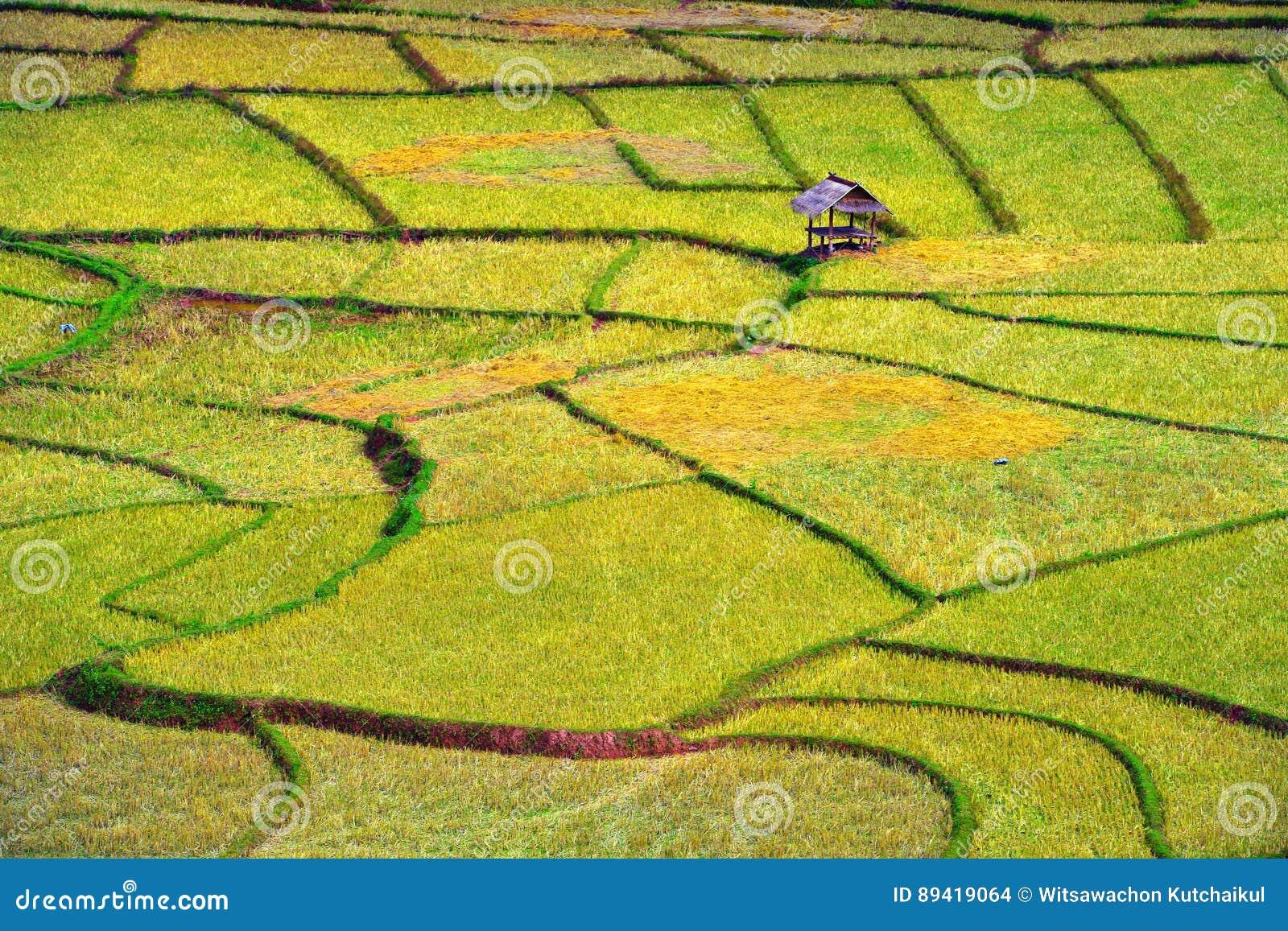 Arte finala na agricultura