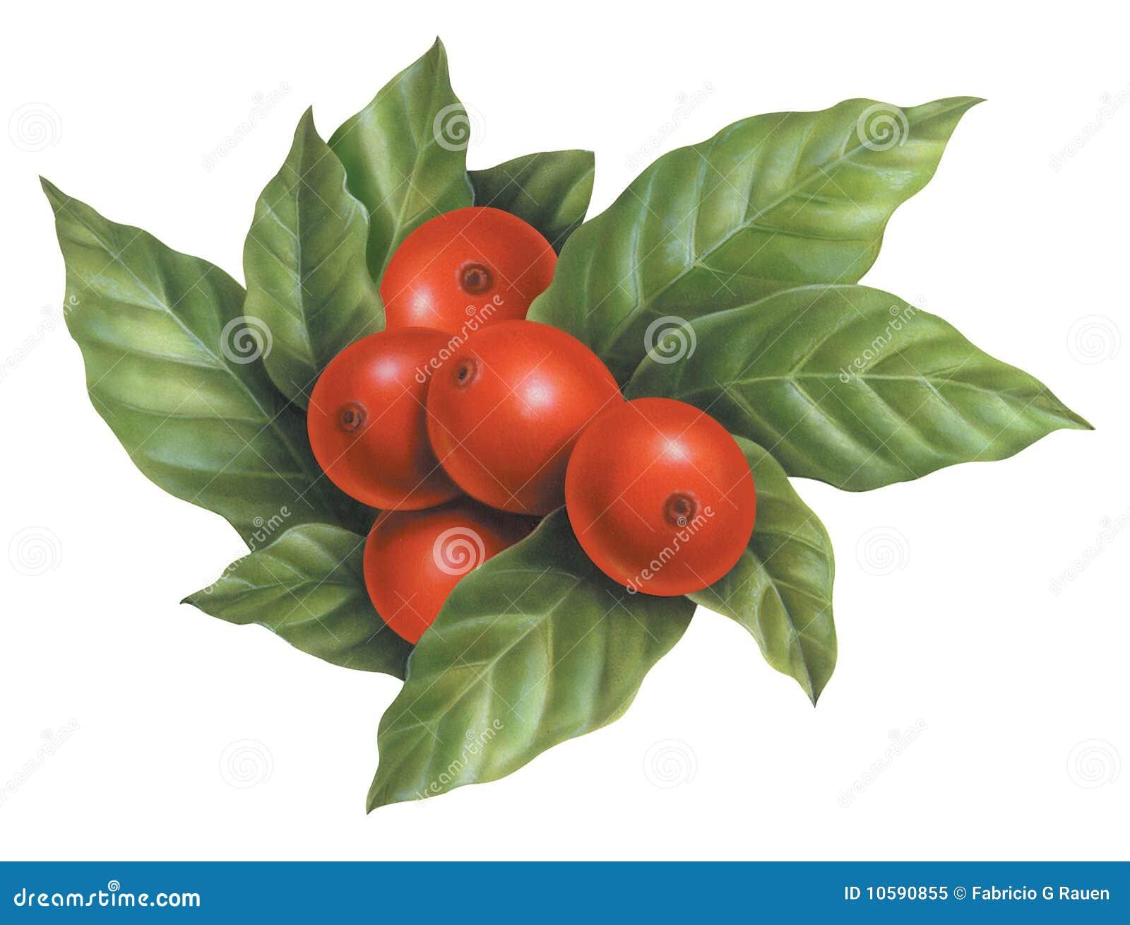 Arte sin procesar de los granos de café