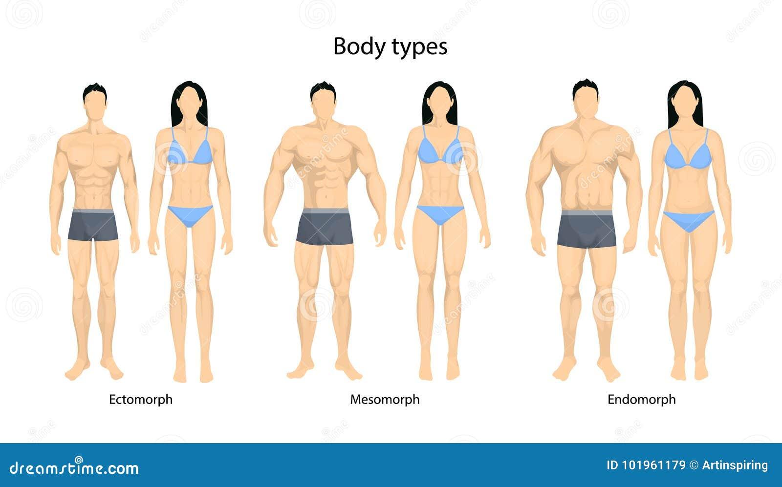 Arten Des Menschlichen Körpers Vektor Abbildung - Illustration von ...