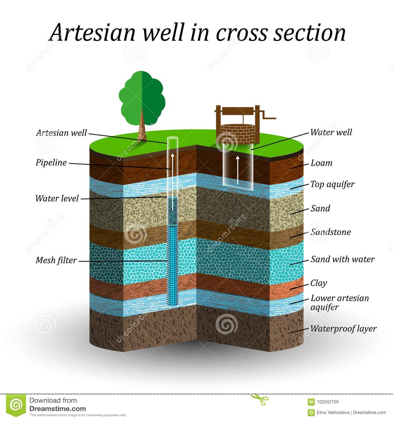 Artesian Water Well In Cross Section Schematic Education