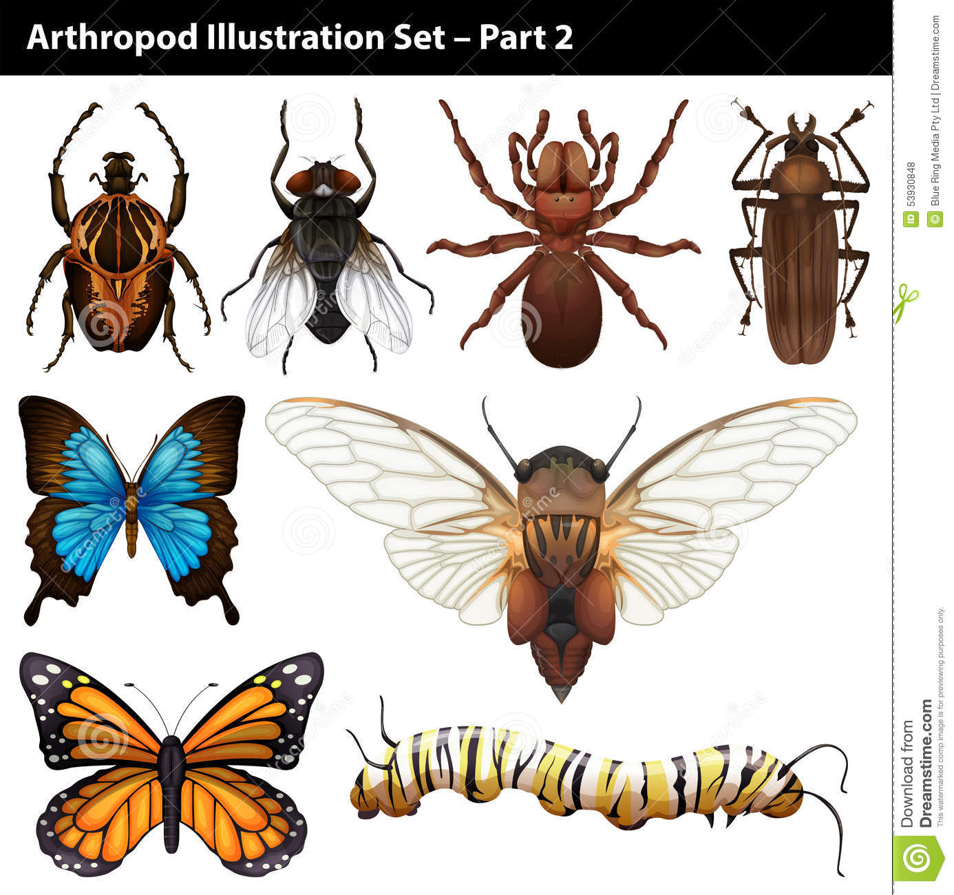 arthropods stock vector illustration of insects clip art of butterflies and flowers clip art of butterflies and caterpillars