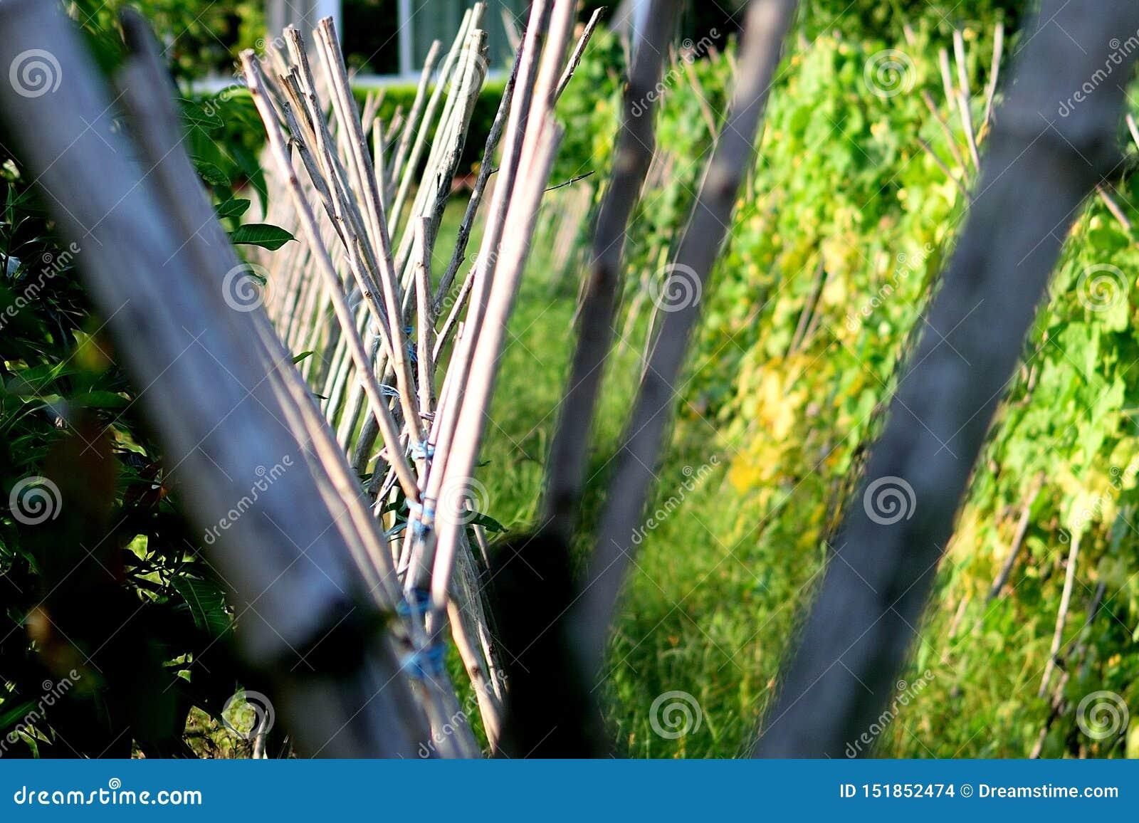 Arti operate di bambù
