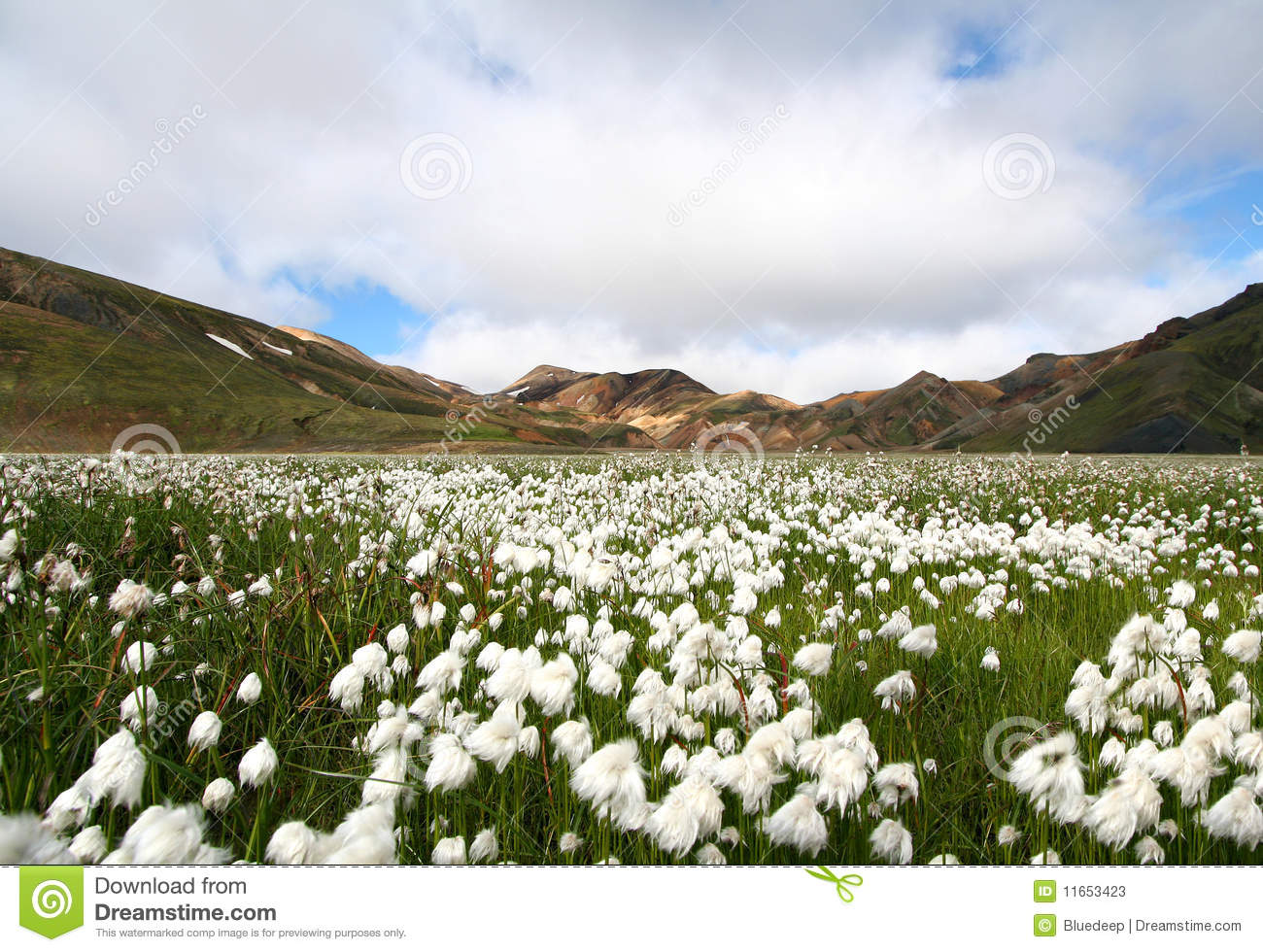 Download Artic Cotton And Coloured Mountains Stock Image - Image of nature, spectrum: 11653423