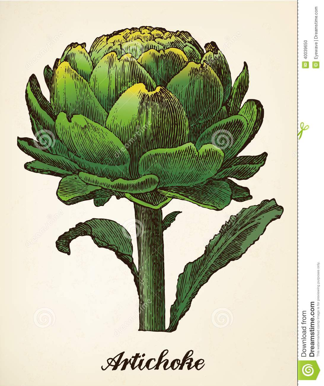 Classic Retro Illustration: Artichoke Vintage Illustration Vector Stock Vector