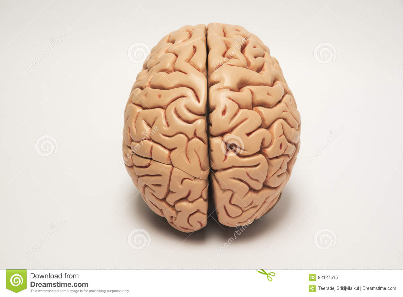 The of human pictures brain