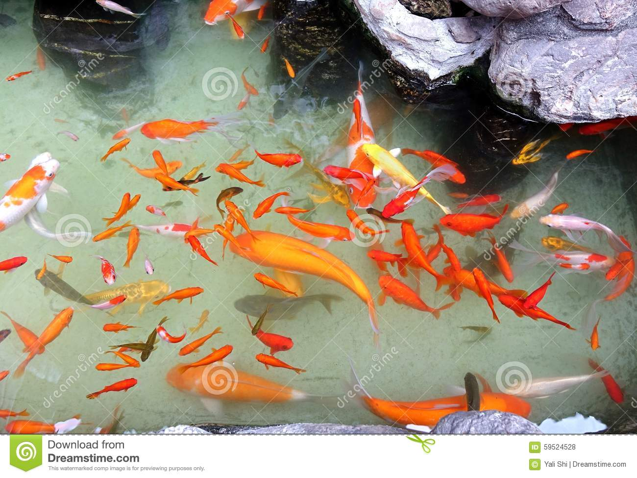 Artificial pond with colorful goldfish stock photo image for Artificial water pond