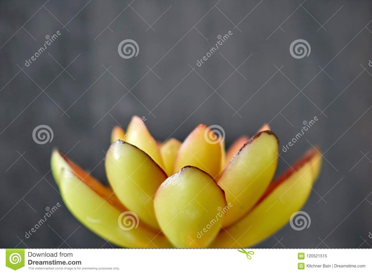Artificial Succulent stock image. Image of foliage, desert - 120521515