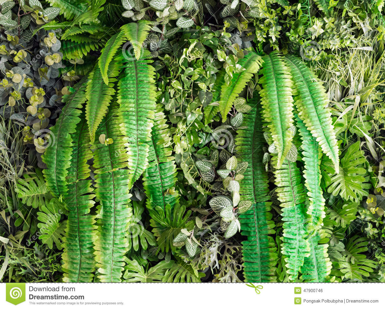 Artificial Vertical Garden Stock Photo Image 47900746