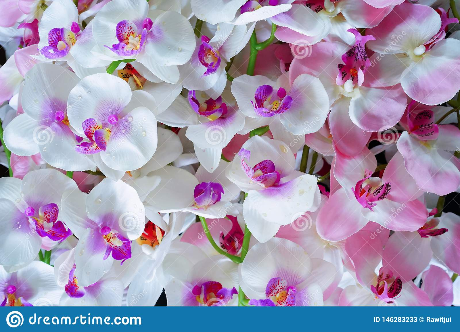 Artificial white and pink orchid flowers
