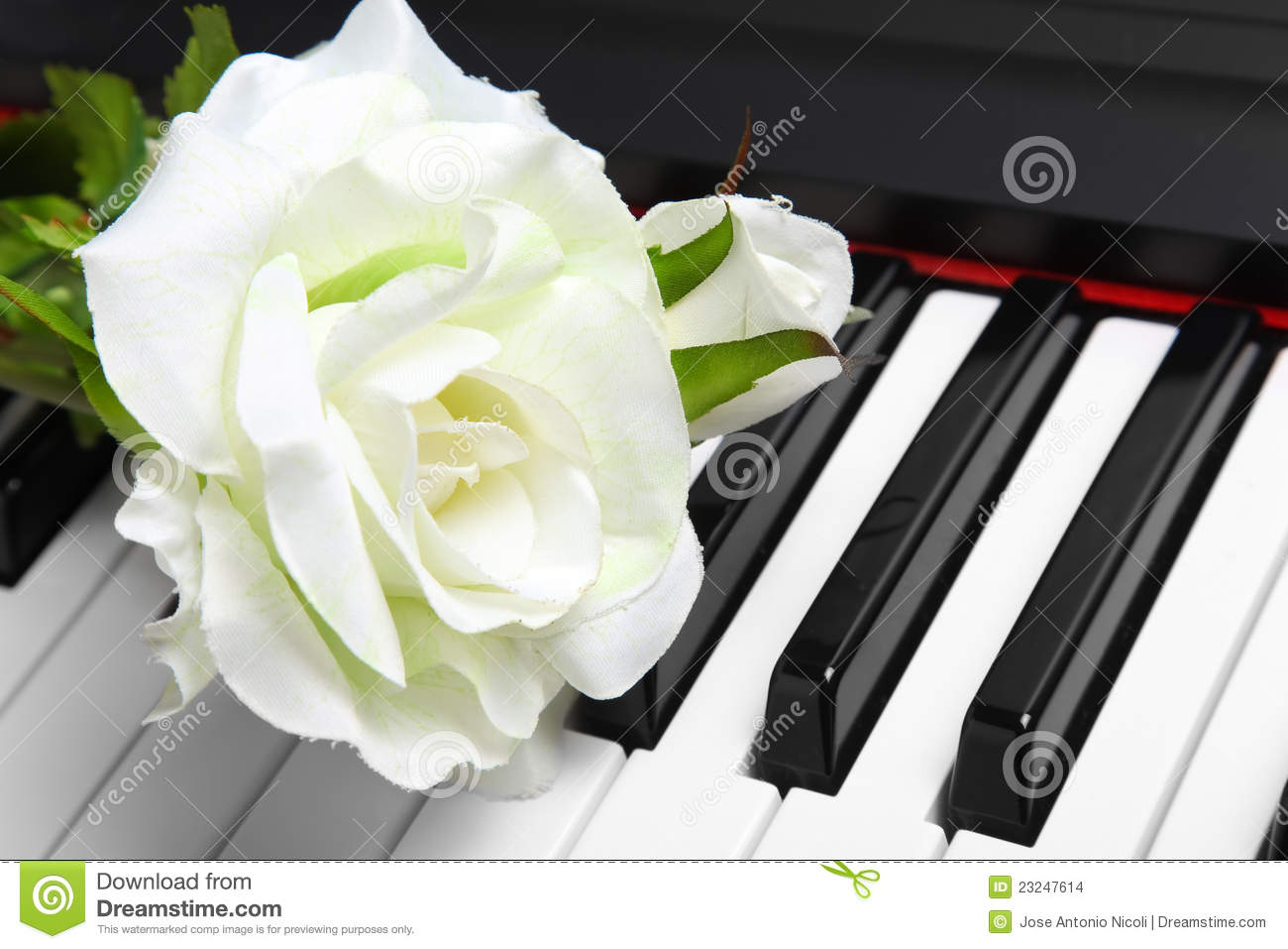 Artificial White Rose On Piano Stock Photo - Image of ...