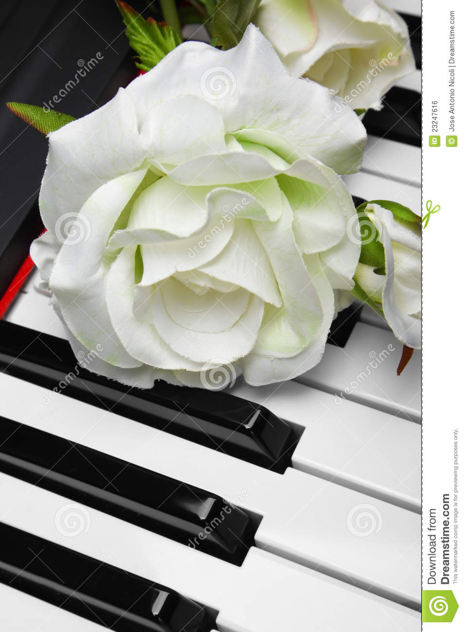 Artificial White Rose On Piano Royalty Free Stock Image ...