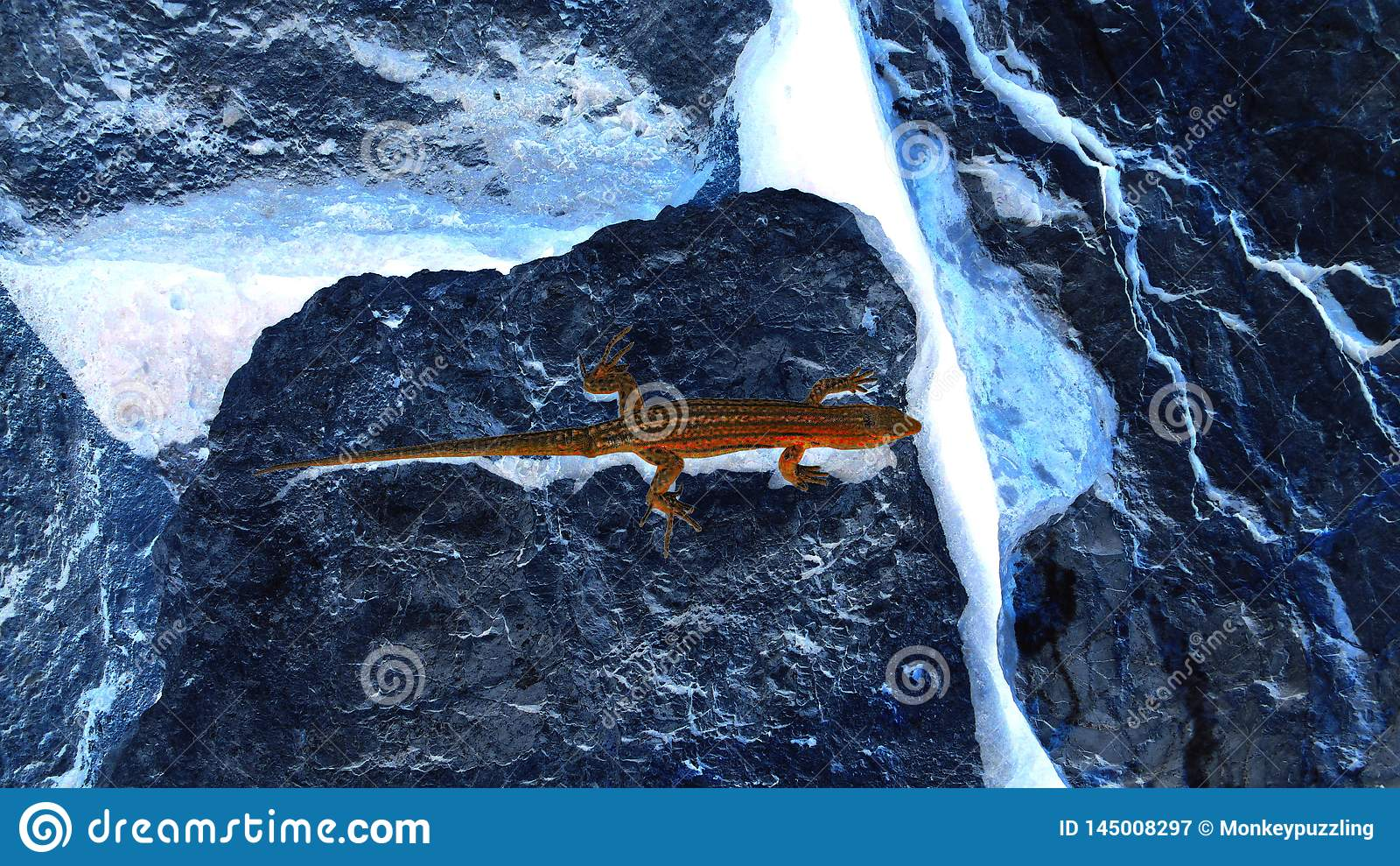 Artistic dark red lizard on dark blue boulders negative