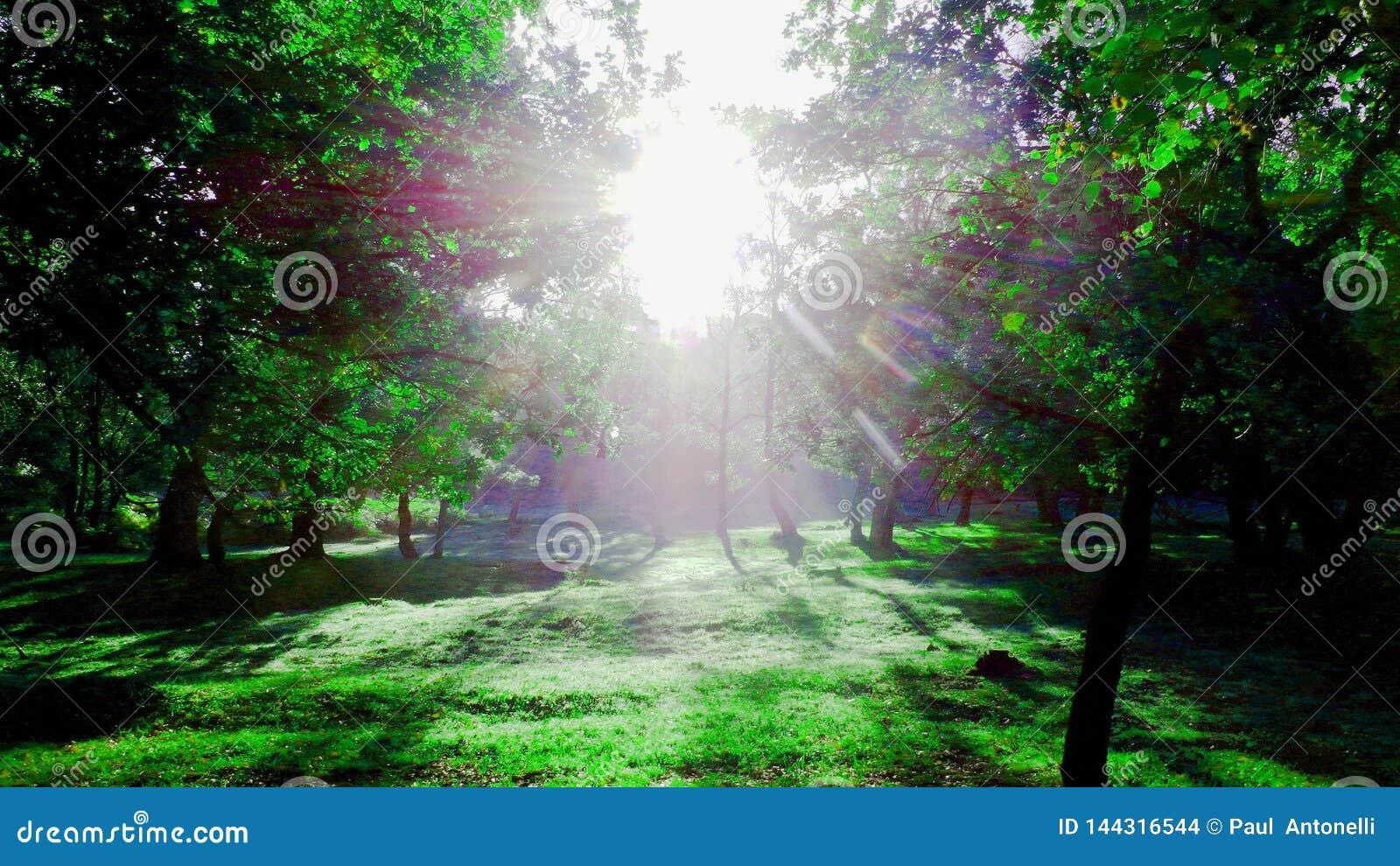 Artistic morning sunlight version 1
