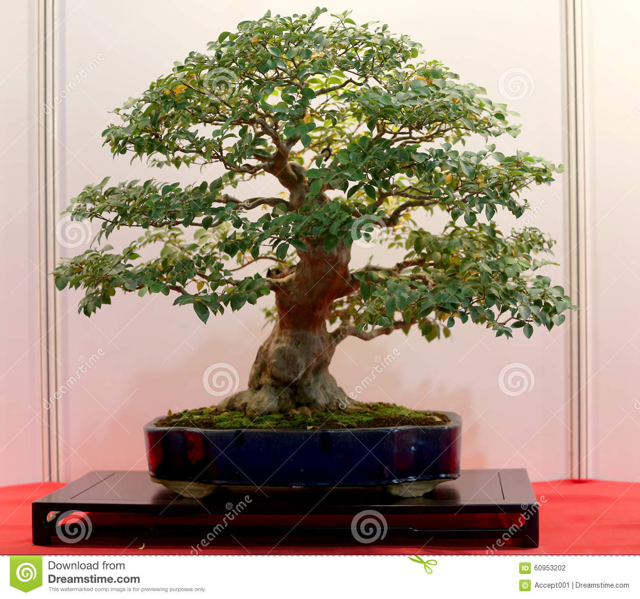 Artistic Potted Bonsai Tree In Flower Pot Stock Photo Image Of