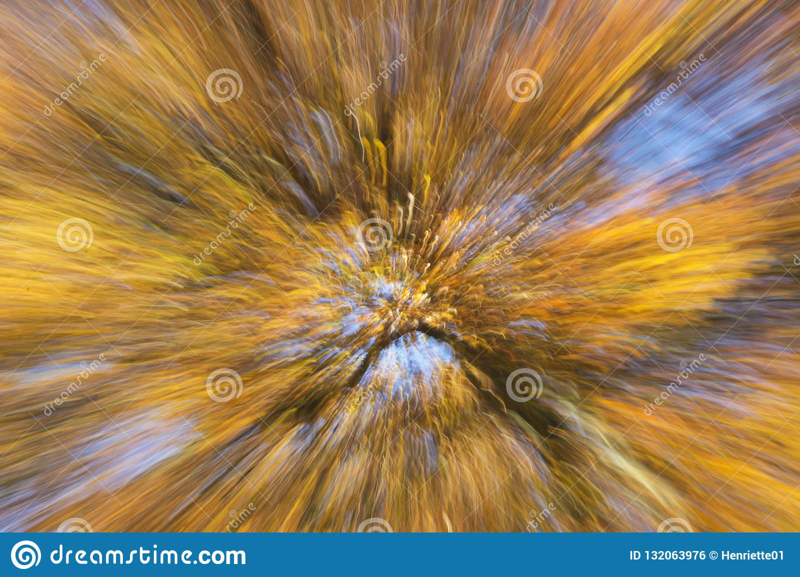 Artistic view on a beautiful tree with branches full of exploding orange and yellow autumn leaves