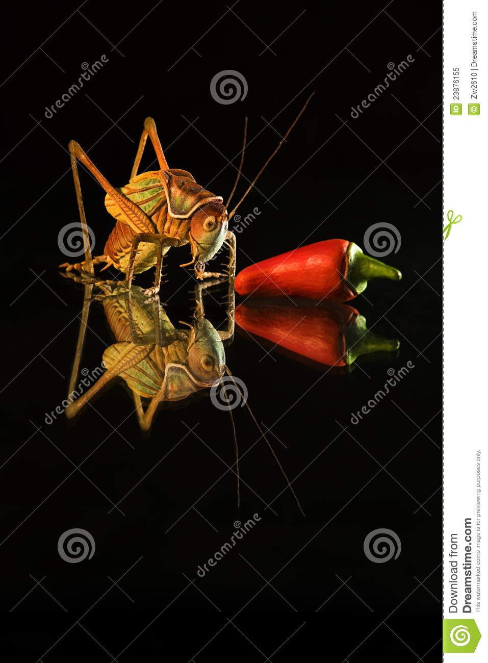 arts of insect and chilli as still life