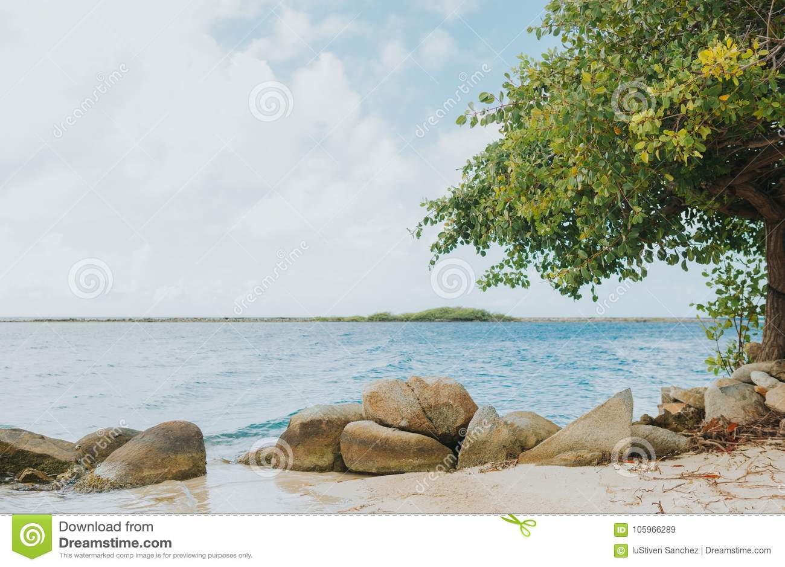 Caribbean Relaxation: Aruba Beach Tropical Island Savaneta Stock Image