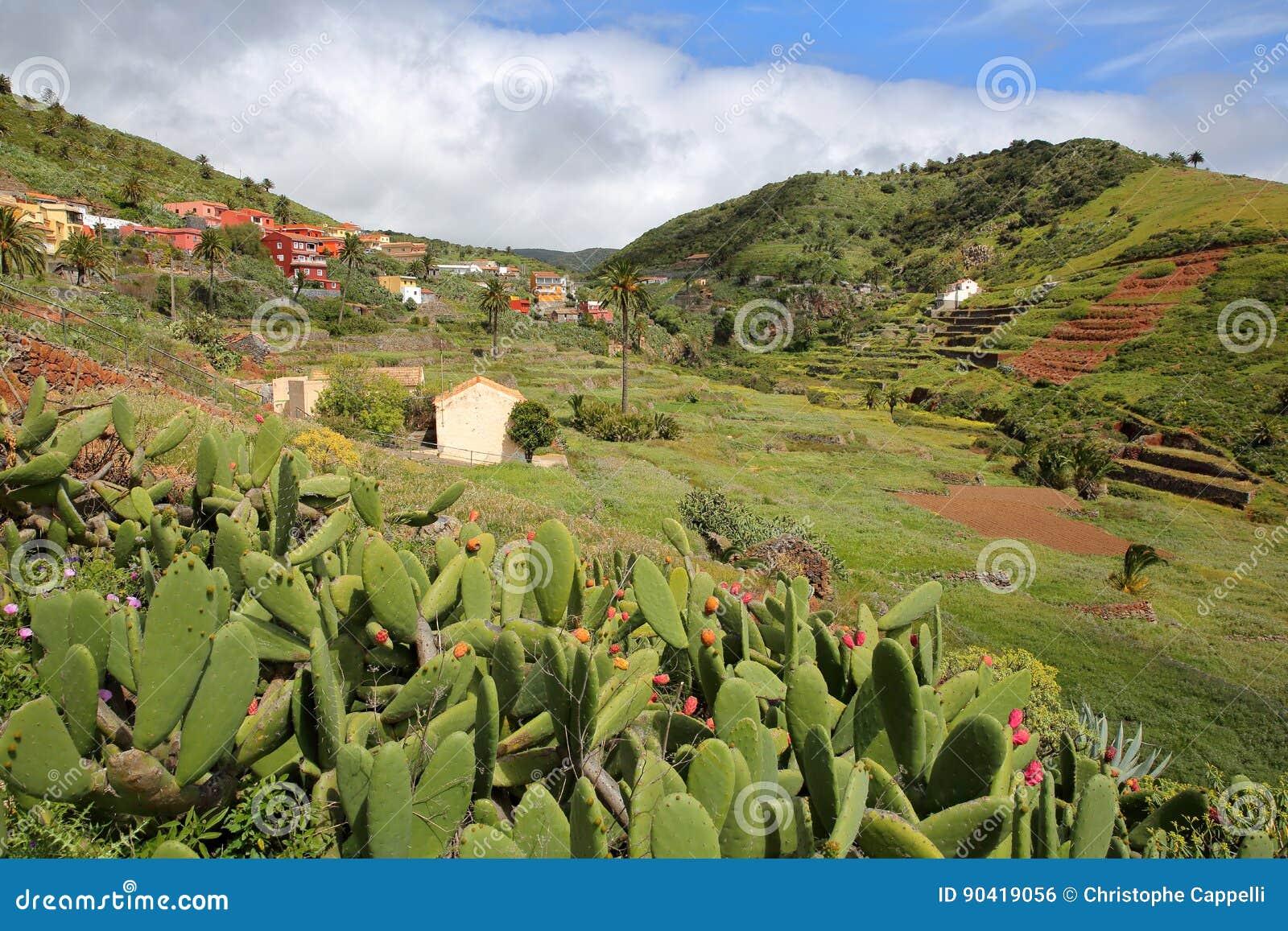 ARURE,戈梅拉岛,西班牙:在Arure附近的培养的露台的领域与前景的仙人掌植物