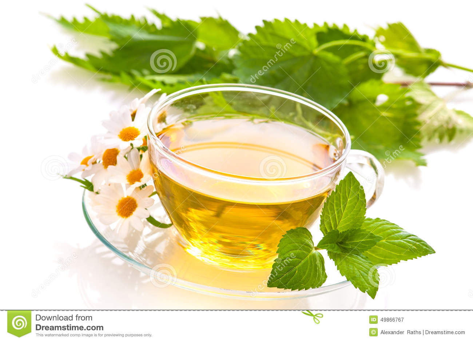 Arvense杯子木贼属植物重点玻璃草本马尾注入naturopathy有选择性的茶