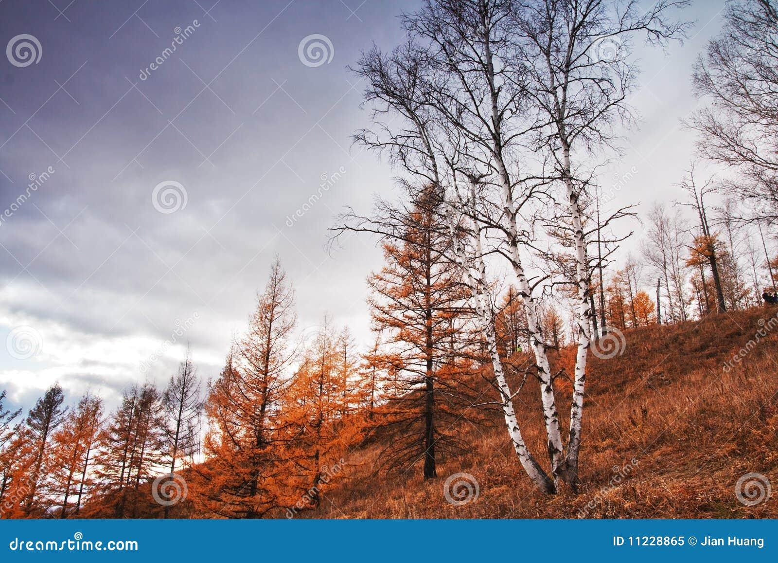 Arxan δασικό εθνικό πάρκο