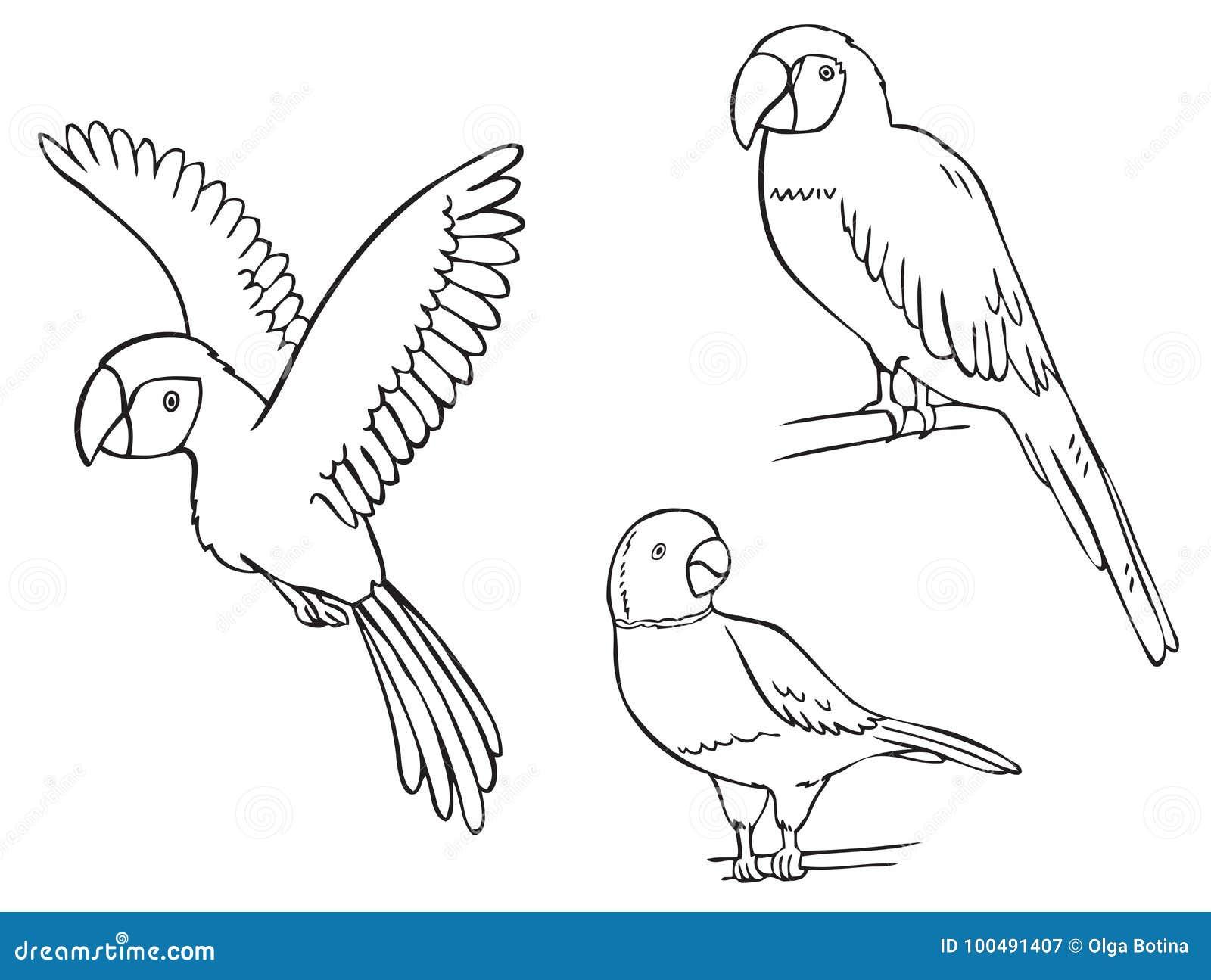 Ary papuga i zegarek kolia