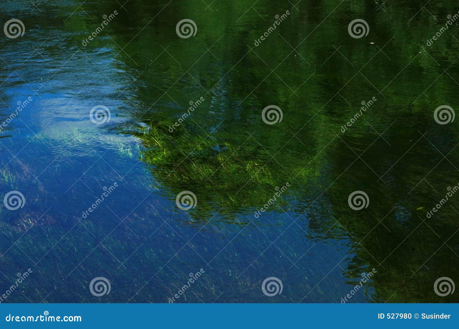 As árvores & as gramas refletiram no rio