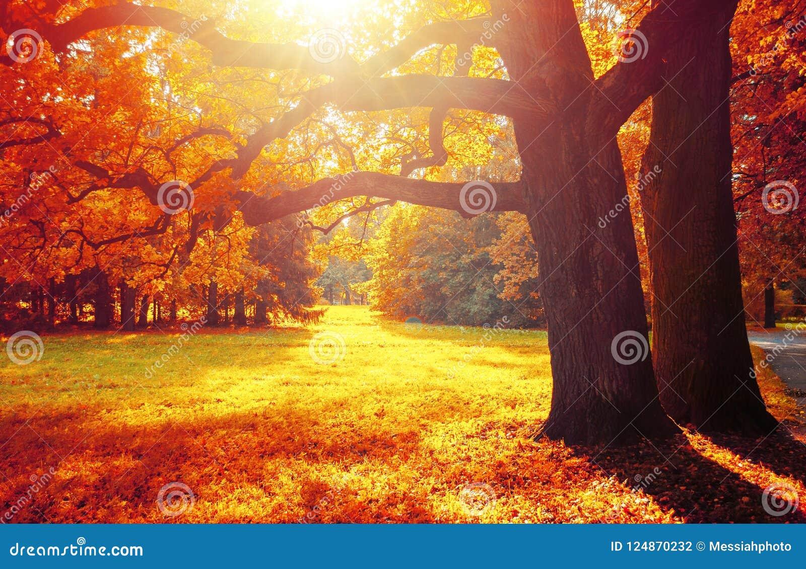 As árvores da queda no parque ensolarado de outubro iluminaram-se nivelando a luz do sol Paisagem colorida da queda