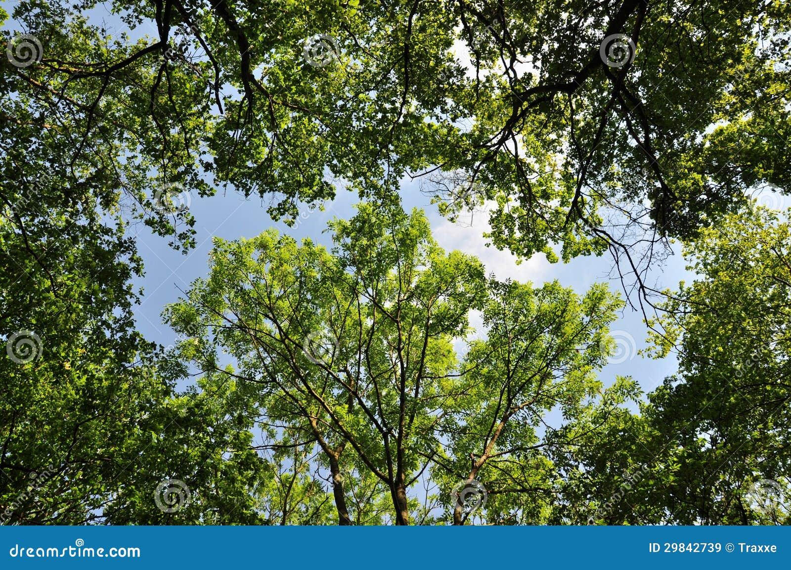 Floresta verde com luz solar