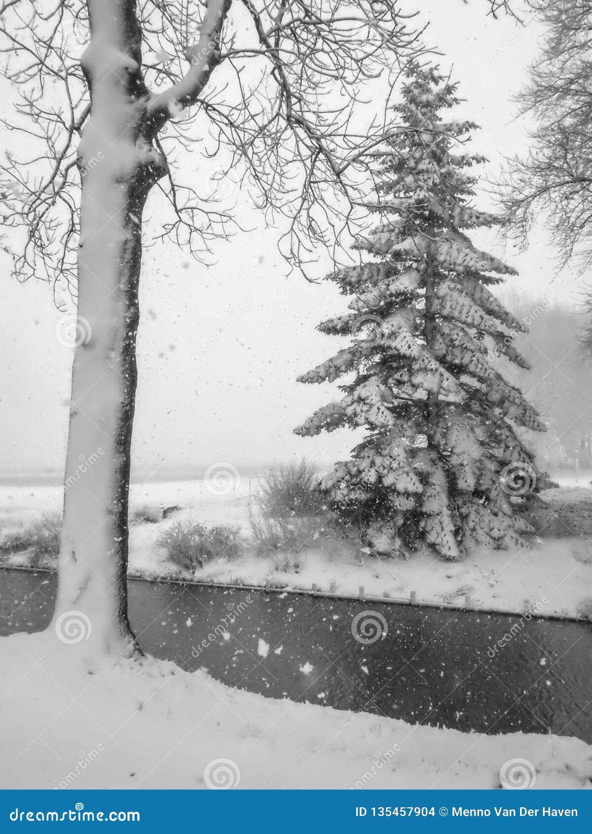 As árvores são cobriram com a neve fresca nos Países Baixos