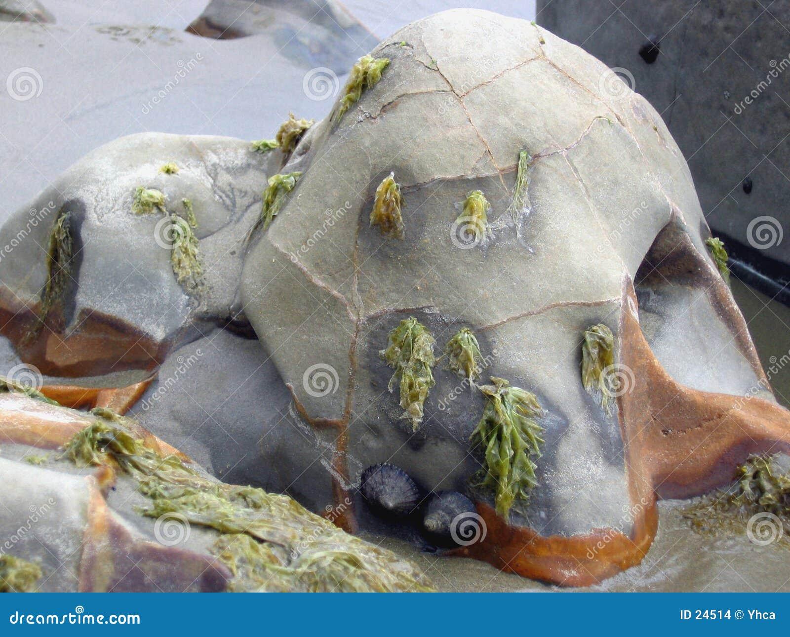 As algas cobriram o pedregulho do beira-mar