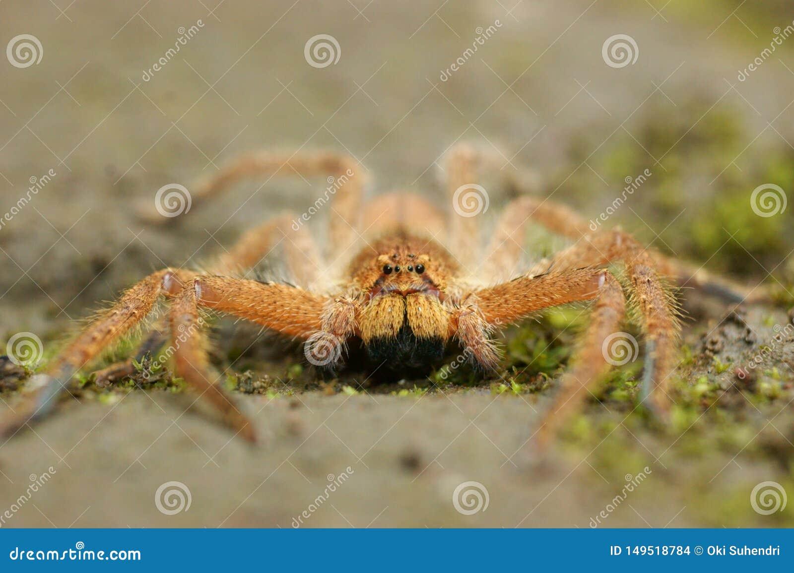 As aranhas na ?rea da floresta, Bandung, Indon?sia