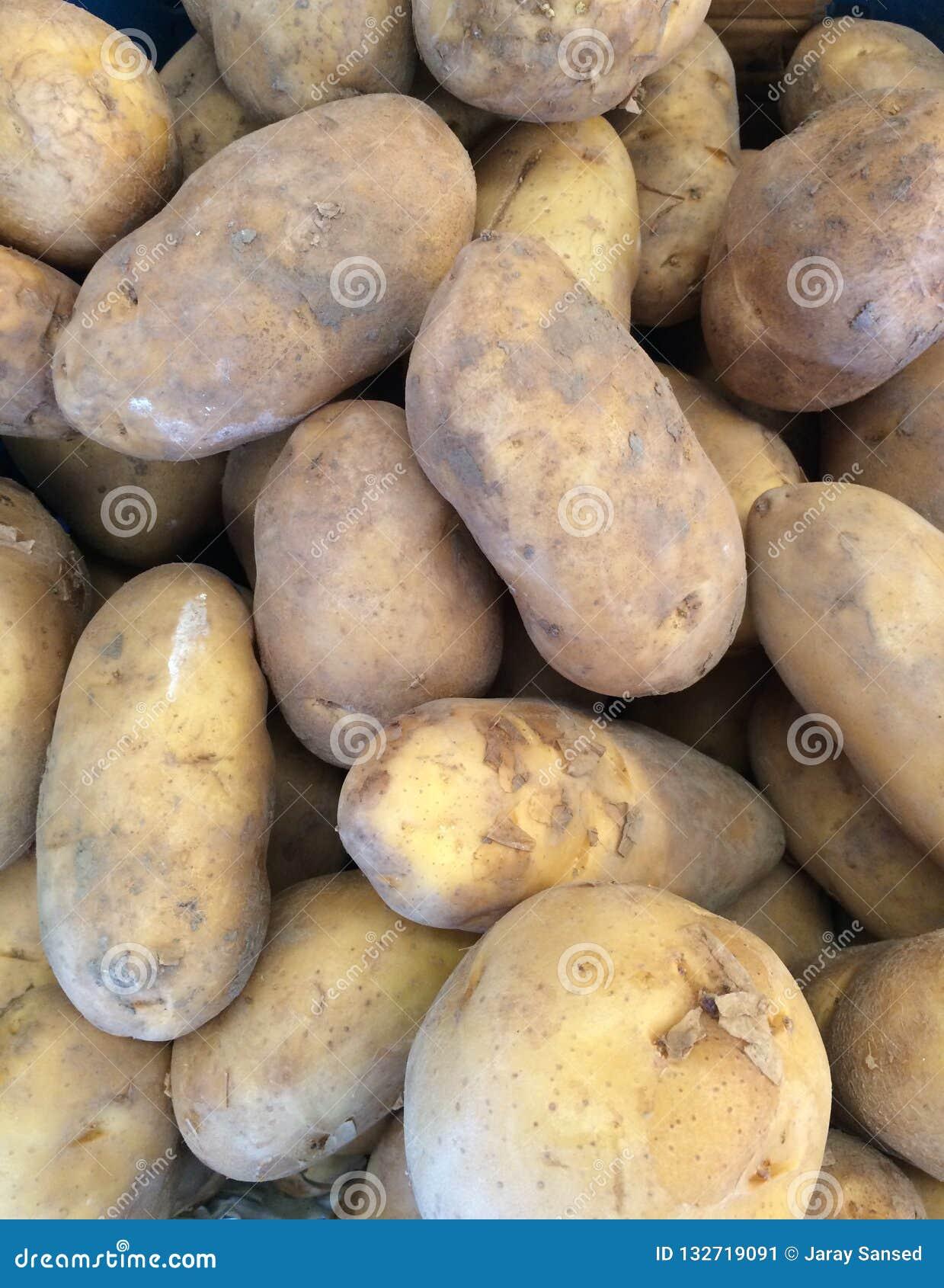 As batatas empilharam junto uma variedade de tamanhos
