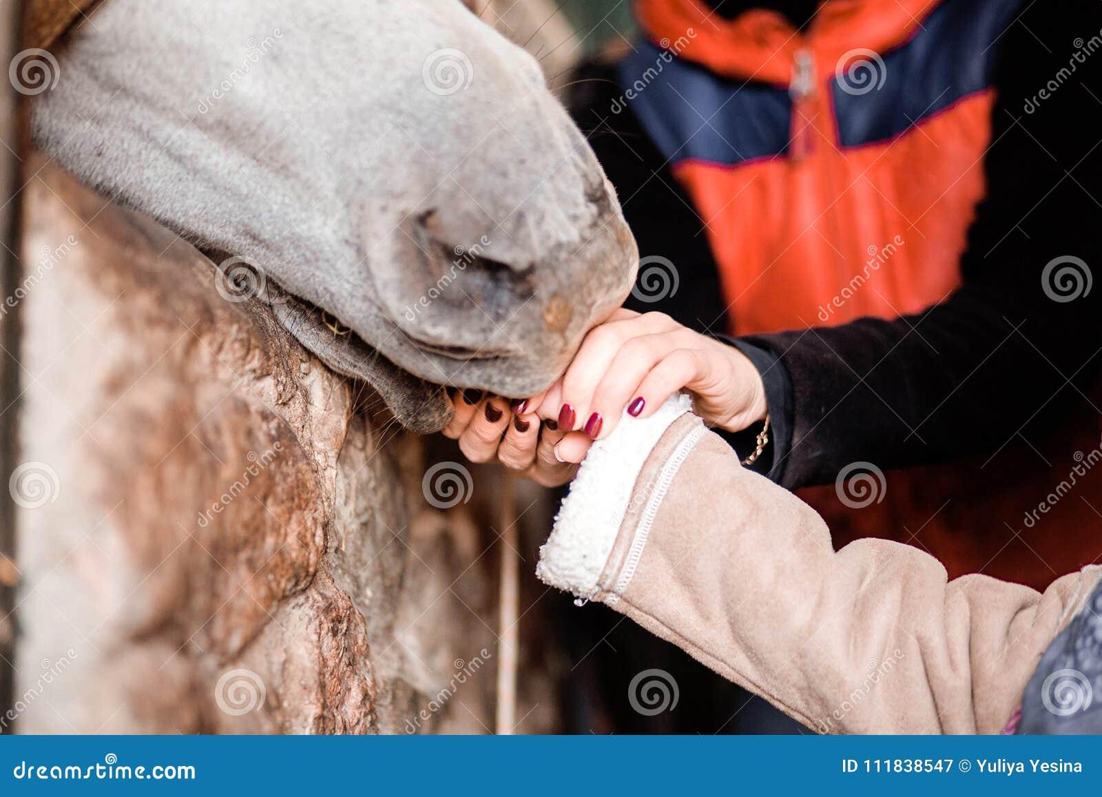 As crianças alimentam o cavalo das mãos na exploração agrícola