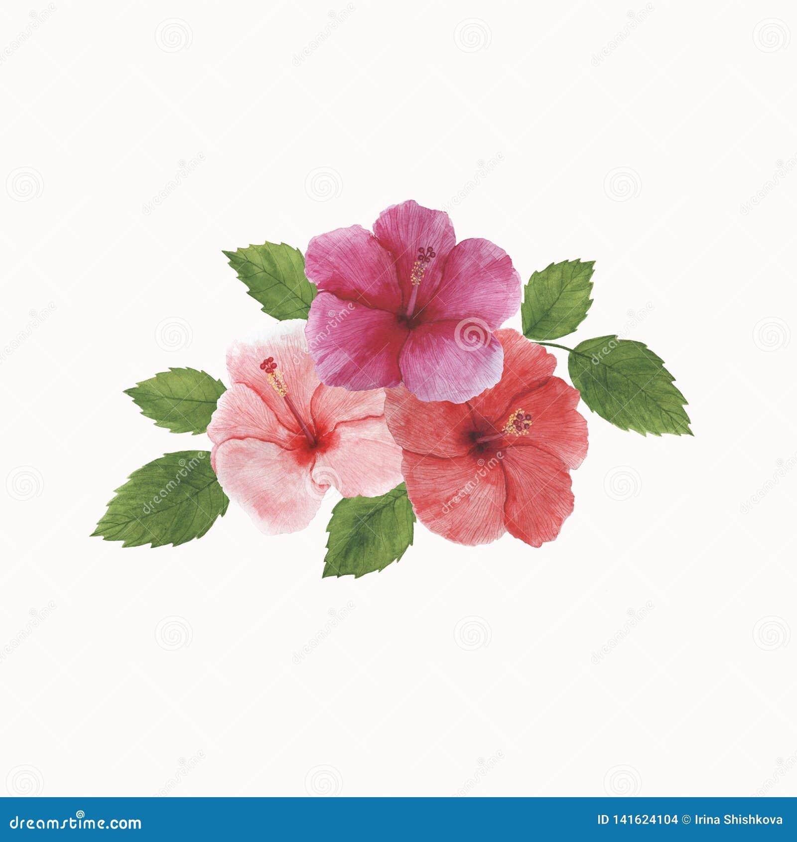 As decorações botânicas da mola da ilustração do quadro da aquarela das folhas das flores dos trópicos projetam convites dos cart
