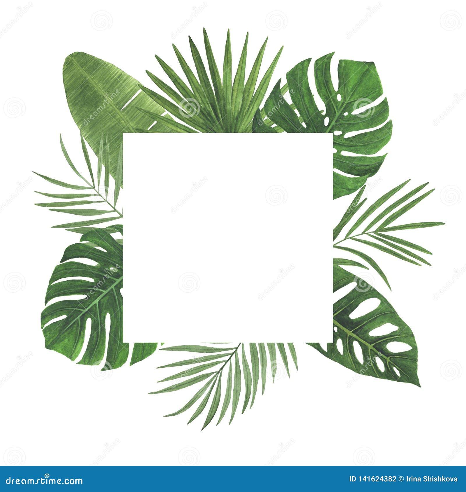 As decorações botânicas da mola da ilustração do quadro da aquarela da palma de Monstera do Plumeria do hibiscus das folhas das f
