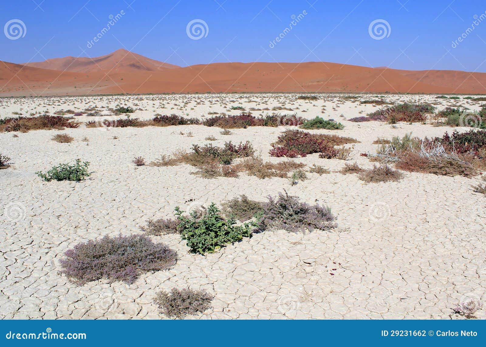 Download As Dunas De Areia De Sossusvlei Ajardinam No Deserto De Nanib Perto De Sesriem Foto de Stock - Imagem de manhã, fundo: 29231662