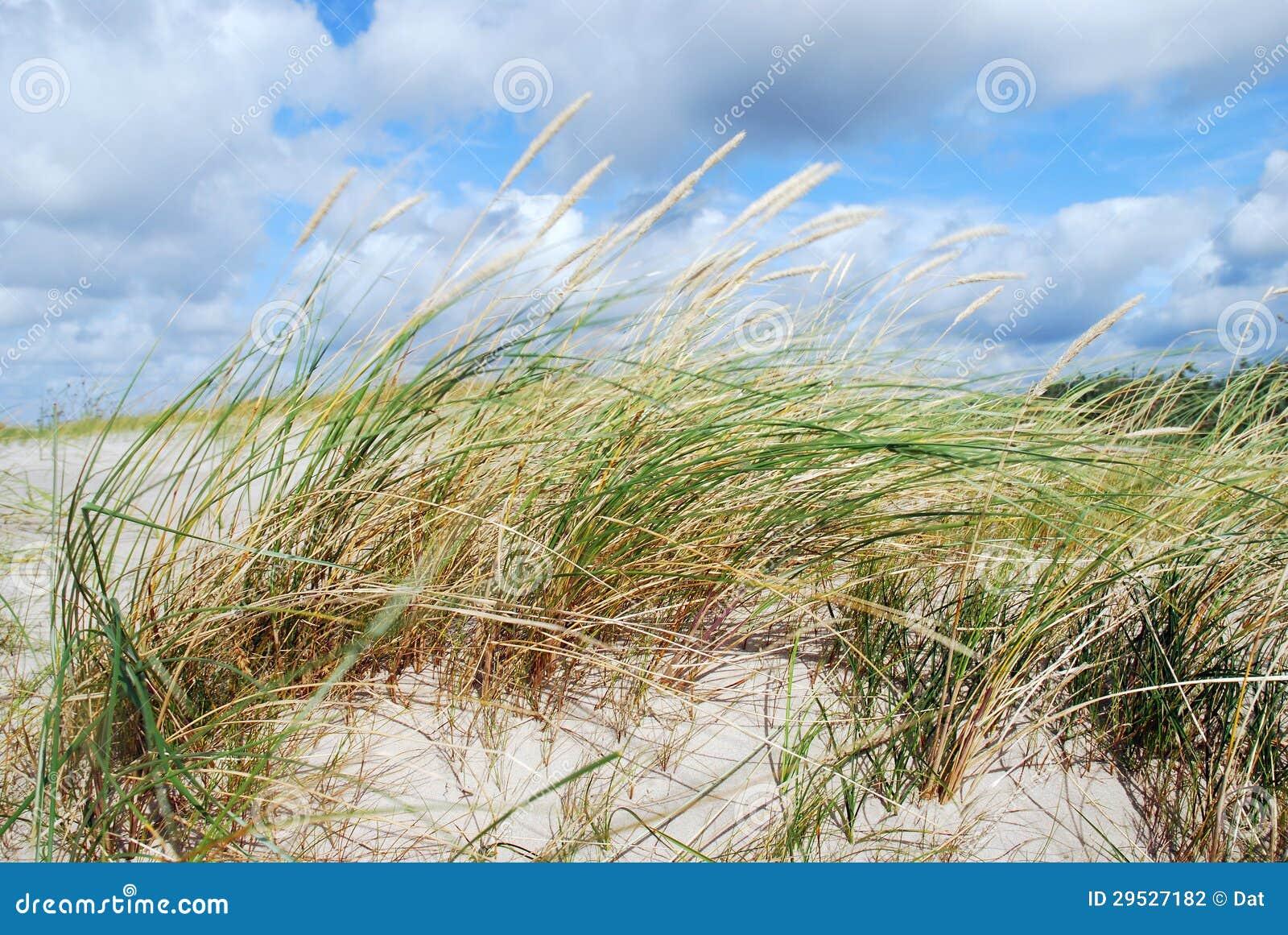 As dunas gramam no vento