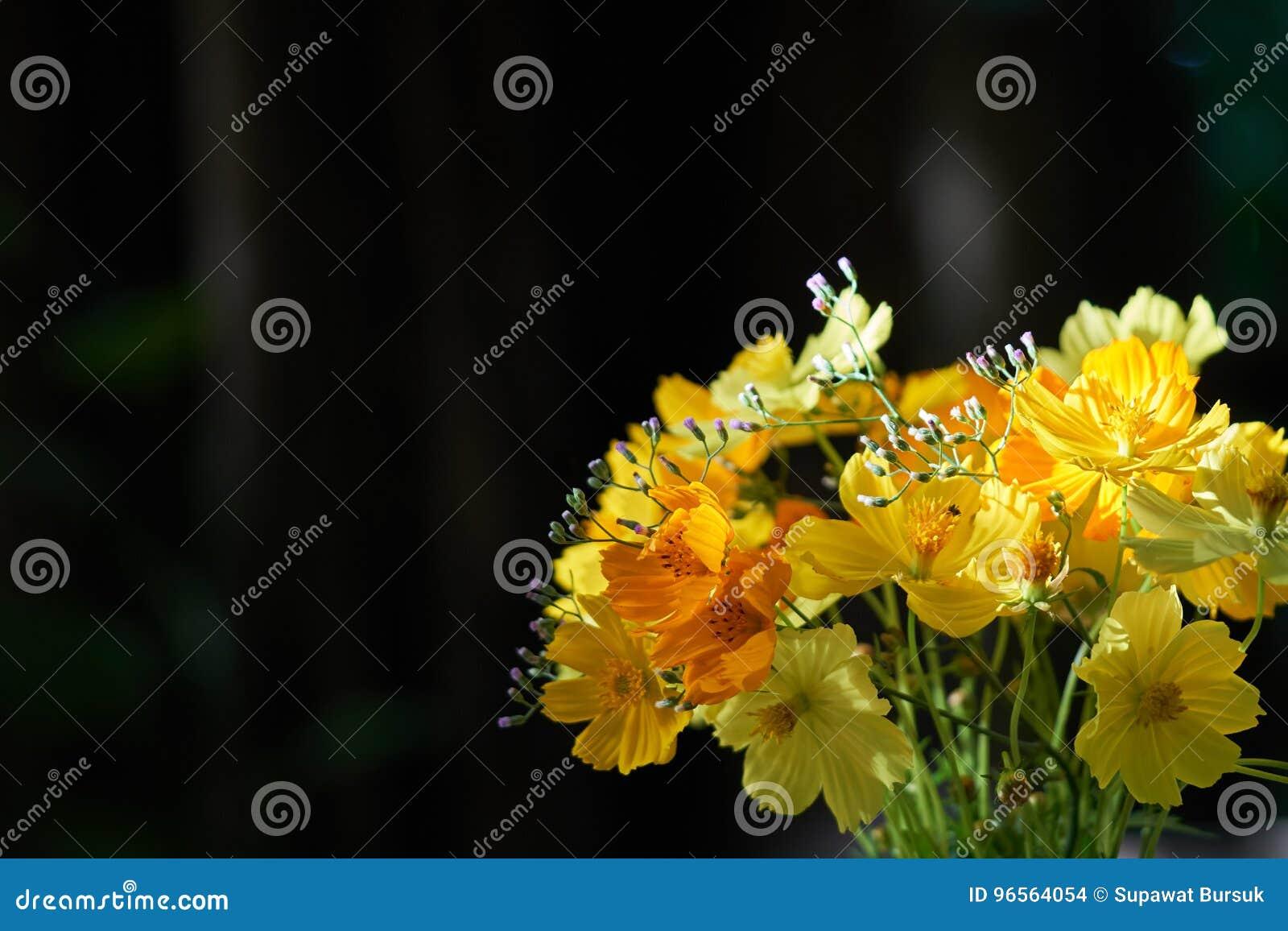 As flores amarelas são arranjadas belamente em uns vasos de flor bonitos e em uma luz solar