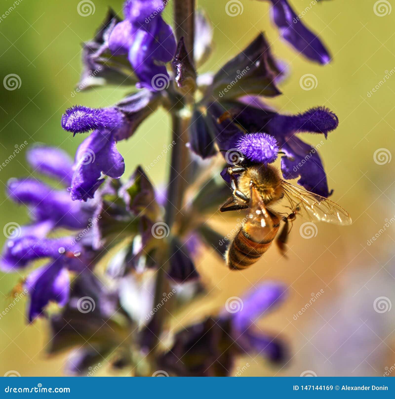 As flores roxas polinizaram por uma abelha em um parque