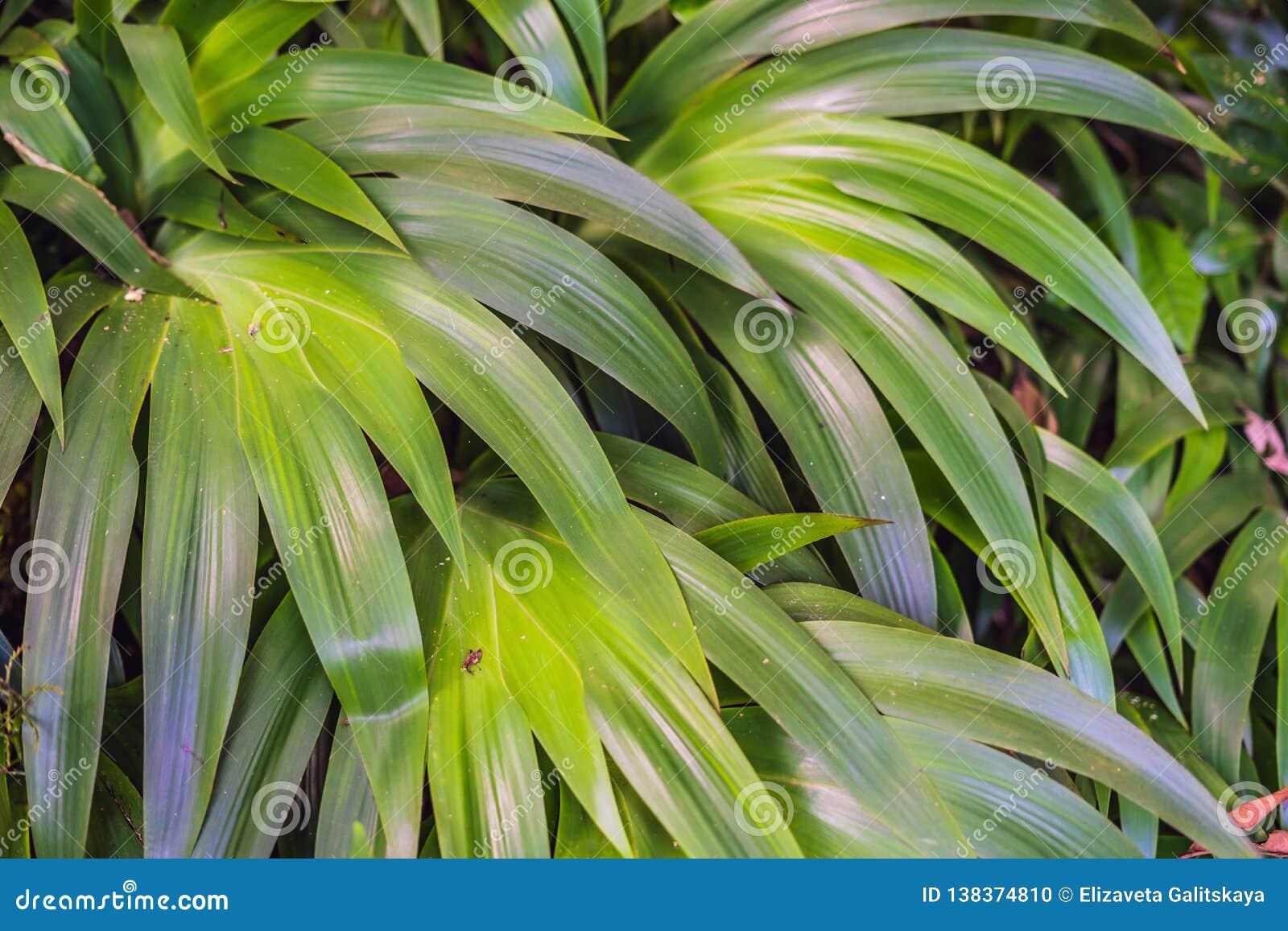 As florestas molhadas exóticas das plantas tropicais estão molhadas após a chuva