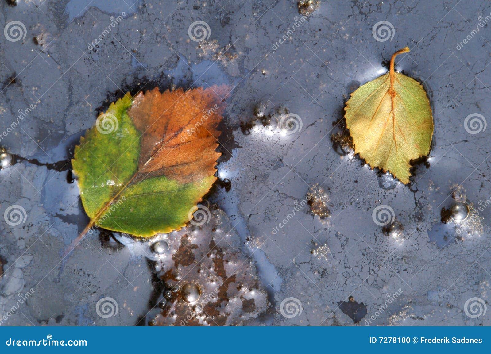 As folhas caíram