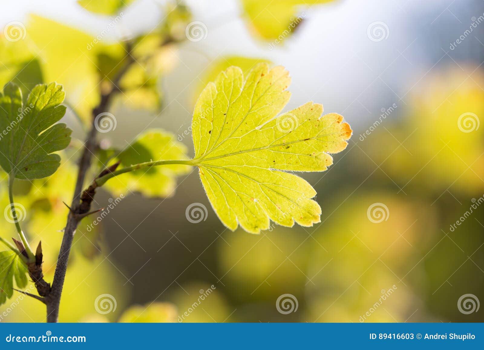 As folhas da planta na natureza